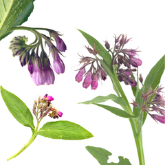 Comfrey for skin care
