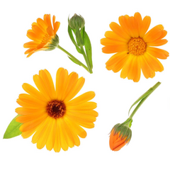 Calendula Flowers For skin care