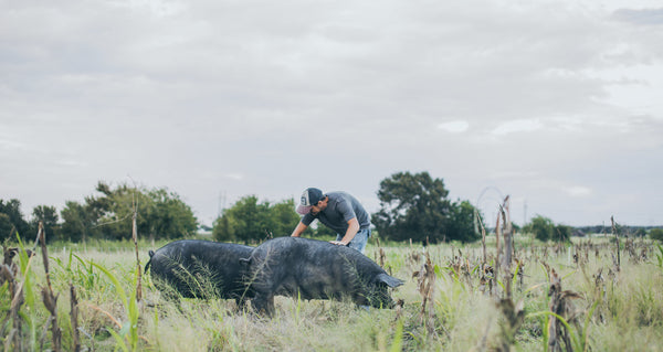 Jon in the pasture with two large black hogs