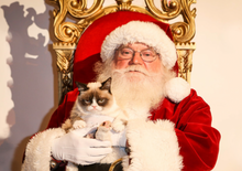 Meowy Catmas Photo with Santa