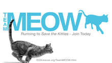 Team MEOW - Member Registration: Rise Up 5K
