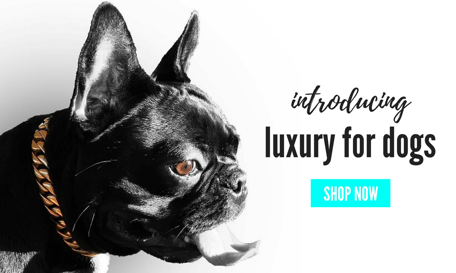 Luxury Dog Collar for Small and tiny Dog from Lil' Dog Chains