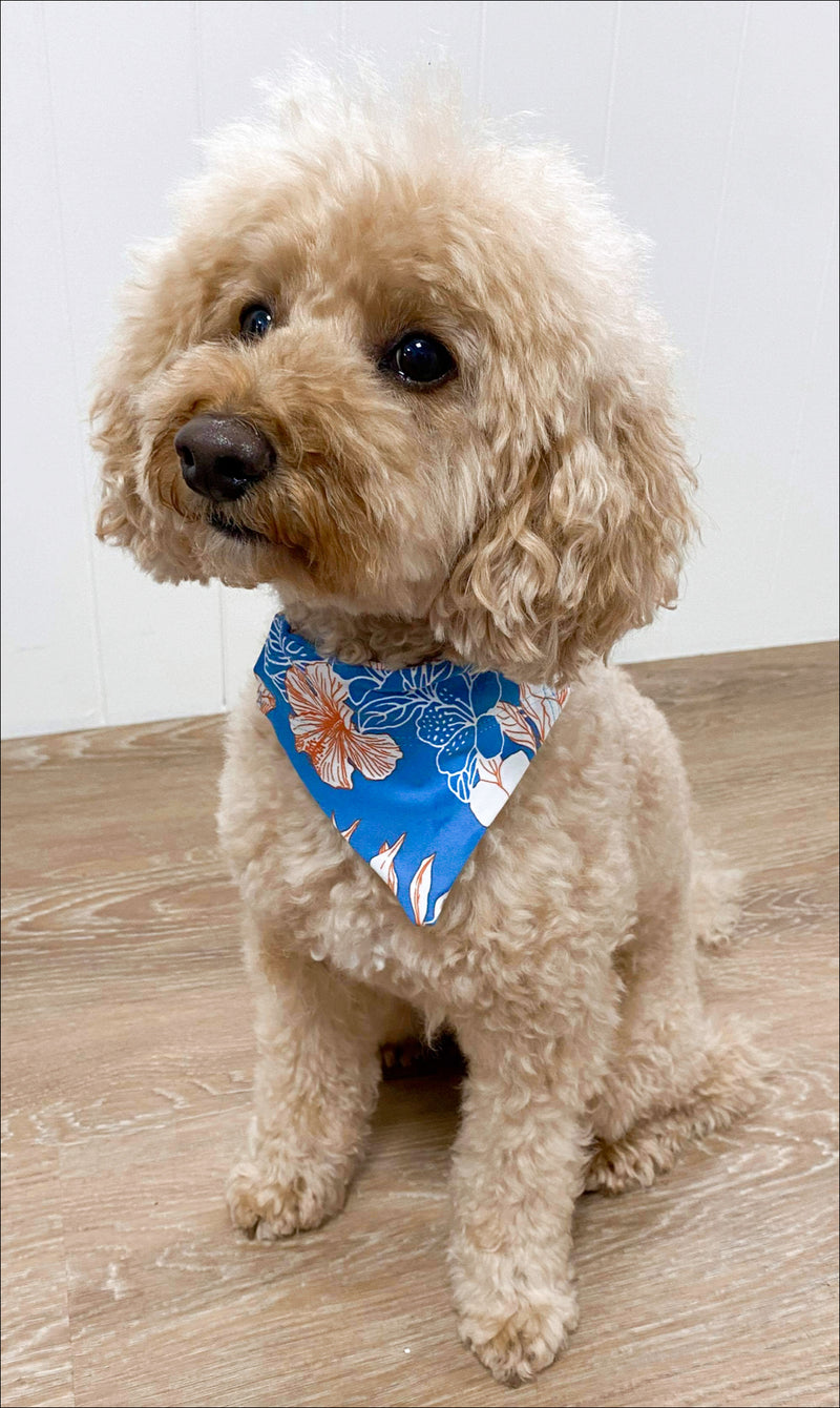 Puppy sitting in Hibiscus Kiss doggy bandana