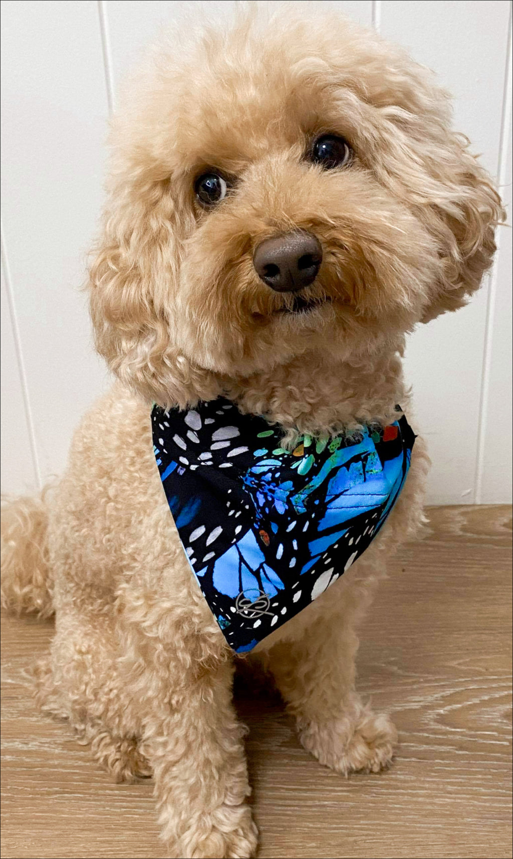 Puppy sitting in JH Butterfly doggy bandana