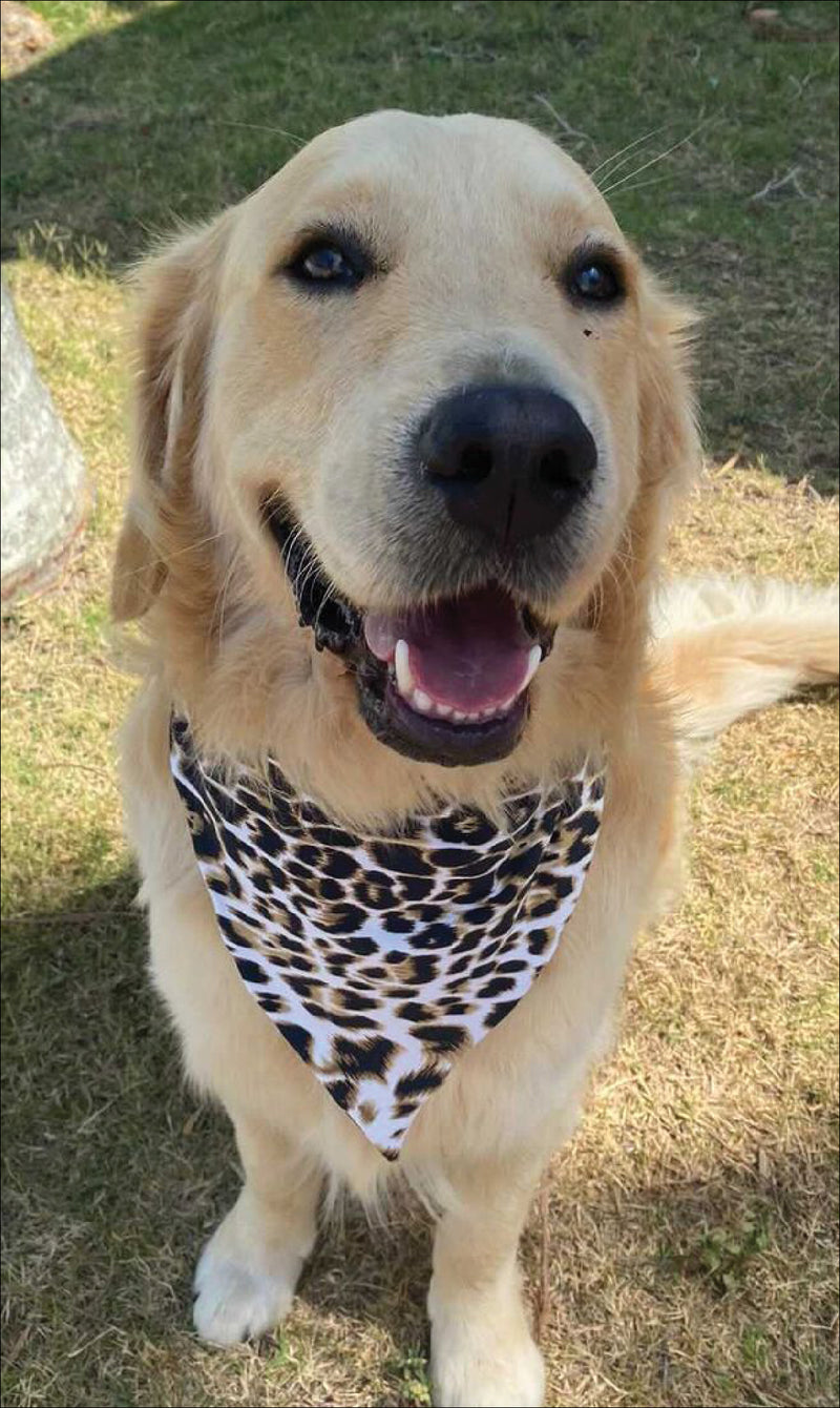 Golden retriever dog sits smiling in brown & white cheetah print doggy bandana