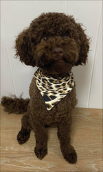 Brown fluffy dog sits in brown & white cheetah print doggy bandana
