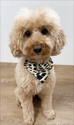 Puppy sitting in White Cheetah doggy bandana
