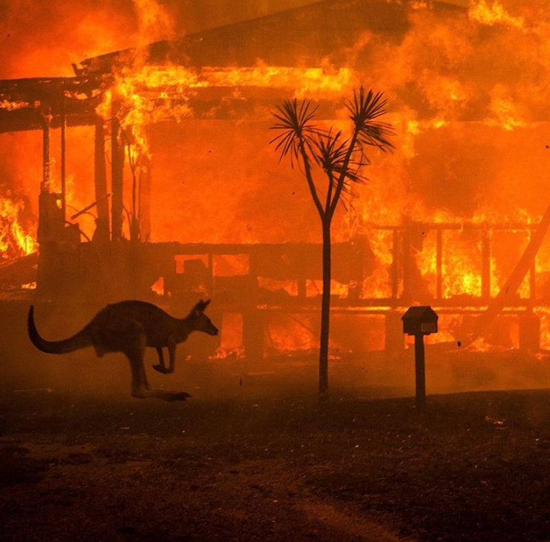 How we can all help in Australia's bushfire crisis