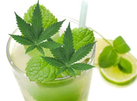 Hemp Cocktails fresh cannabis