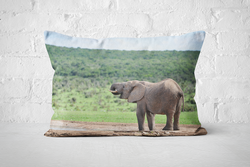 African Wildlife 10 | Pillow Rectangle - But Why Not