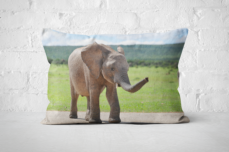 African Wildlife 13 | Pillow Rectangle - But Why Not