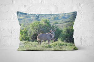 African Wildlife 1 | Pillow Rectangle - But Why Not