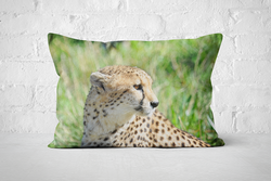 African Wildlife 25 | Pillow Rectangle - But Why Not