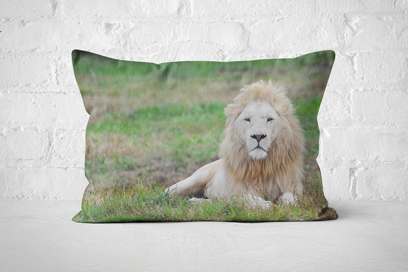 African Wildlife 26 | Pillow Rectangle - But Why Not