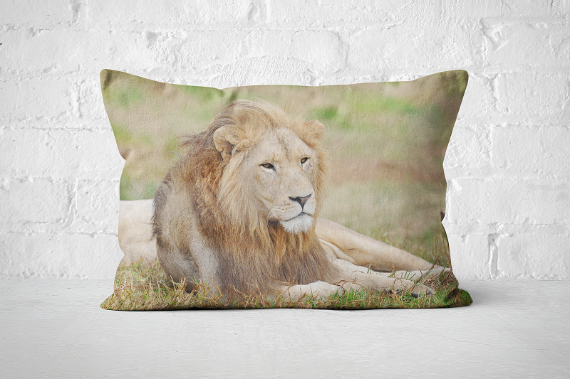 African Wildlife 31 | Pillow Rectangle - But Why Not