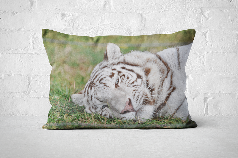 African Wildlife 34 | Pillow Rectangle - But Why Not