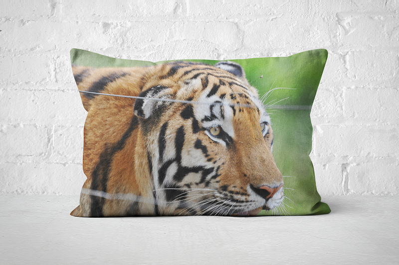 African Wildlife 36 | Pillow Rectangle - But Why Not