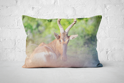 African Wildlife 4 | Pillow Rectangle - But Why Not