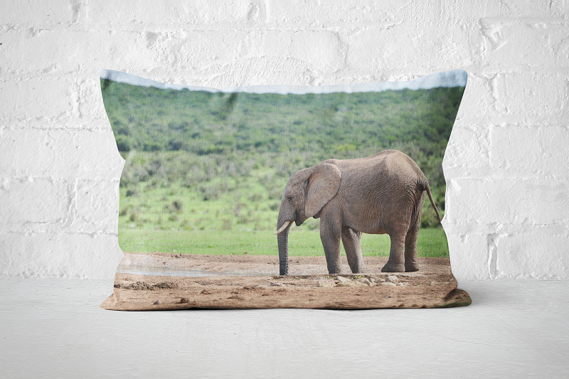 African Wildlife 9 | Pillow Rectangle - But Why Not