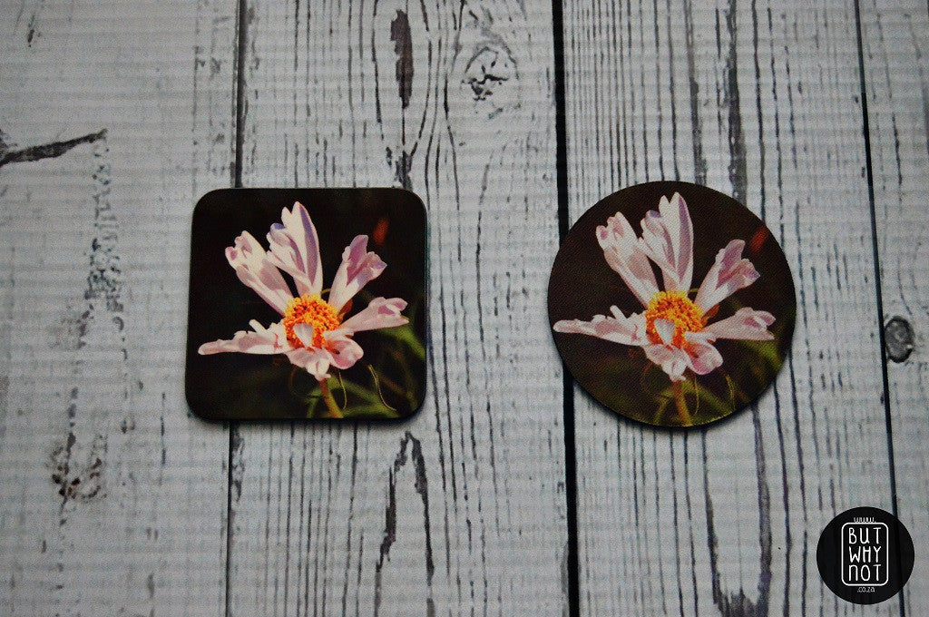 Coasters - But Why Not