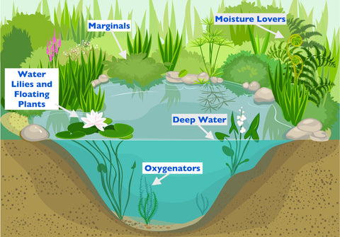 How to Plant - Water Plants in Your Pond - Plants for Ponds
