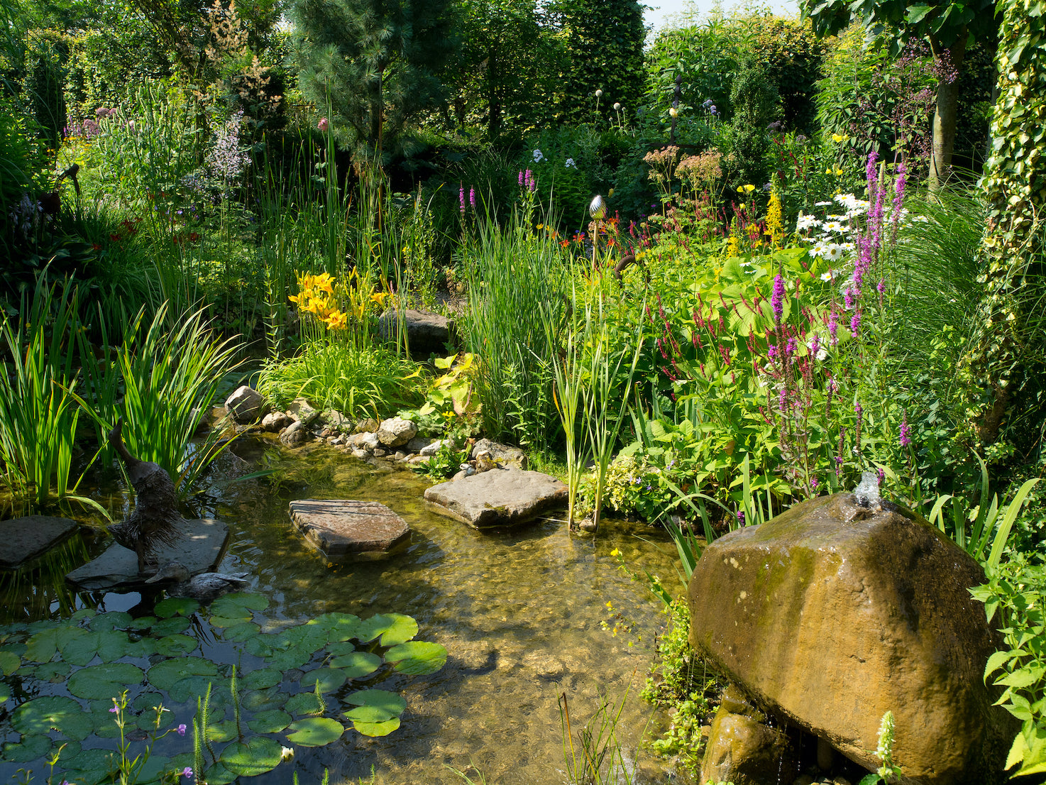 Wildlife Pond - Plants for Ponds Ltd