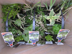 Multi Plant Packaging - Plants for Ponds