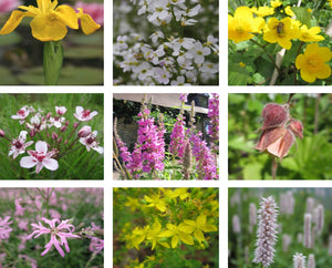 Native Wildlife Marginal Pond Pack - Plants for Ponds