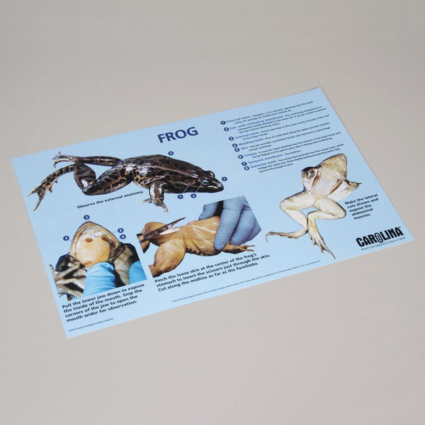 Frog Dissection Mat