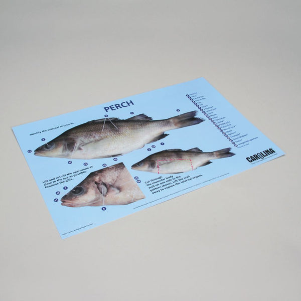 Fish Dissection Mat