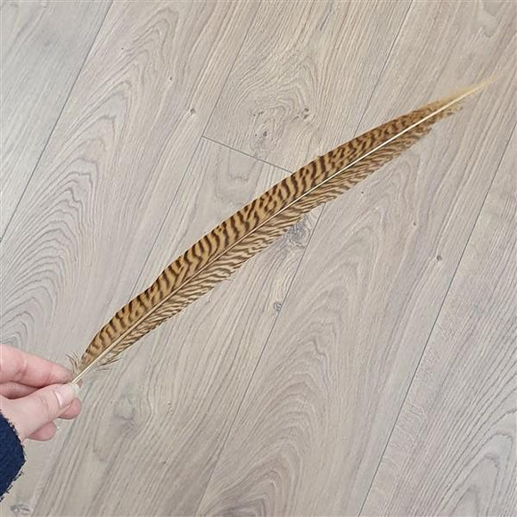 Golden Pheasant Feather-Freya Jones-Freya Jones Art and Craft