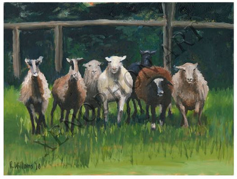 """Stampeding Sheep"" by Richard F. Williams Art Giclée on Canvas"