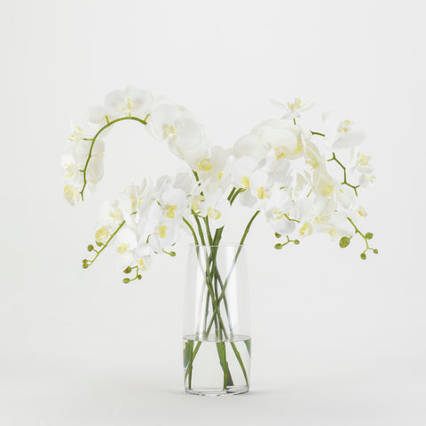 White Orchids in Glass Vase