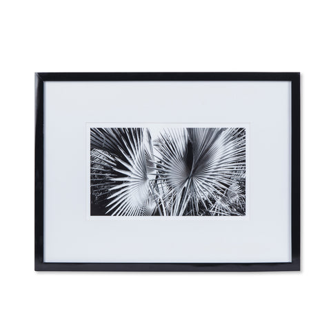 Black & White Palm Leaves