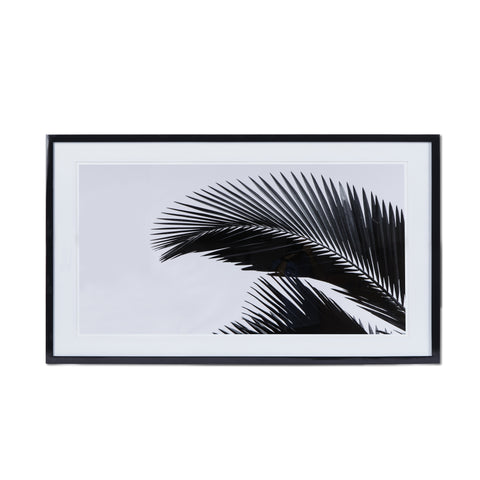 Black & White Palm Leaf