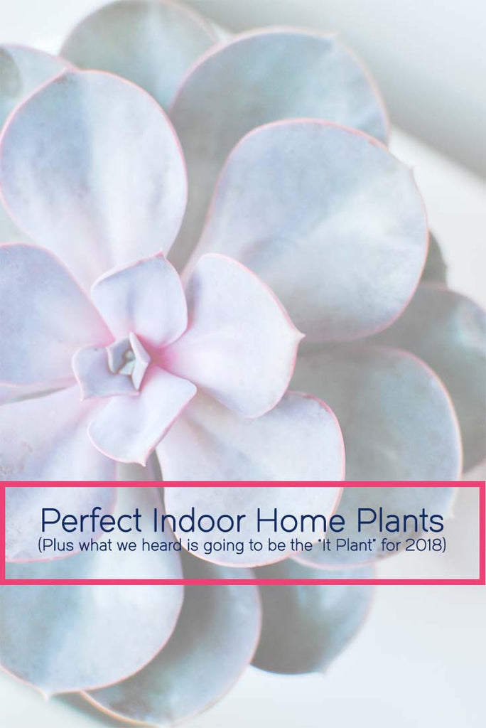 Best Indoor Home Plants