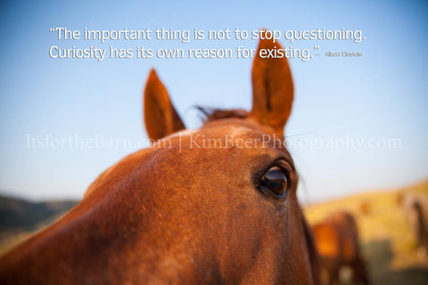 The important thing is not to stop questioning.