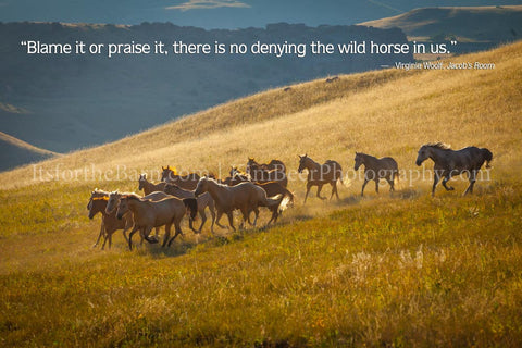 Blame it or praise it, There is no denying the wild horse in us.