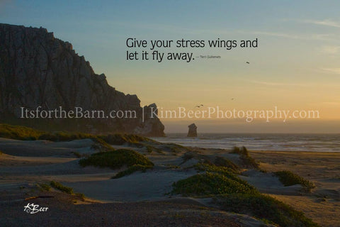 Give your stress wings and let it fly away.
