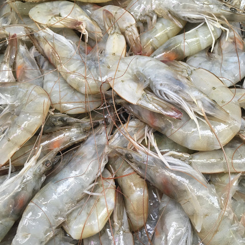 SHRIMP (HEAD ON) 30/40 蝦 (有頭) 30/40