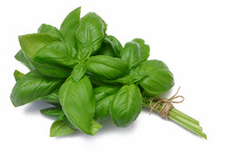 Basil Sweet Organic Oil