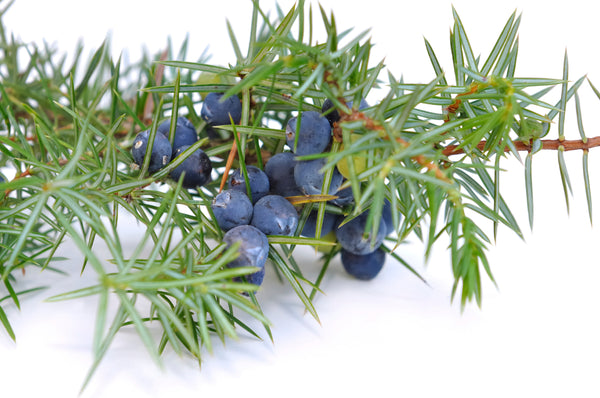 Juniper Berry Organic Oil
