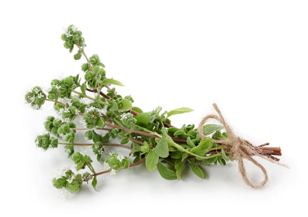 Marjoram Spanish Oil