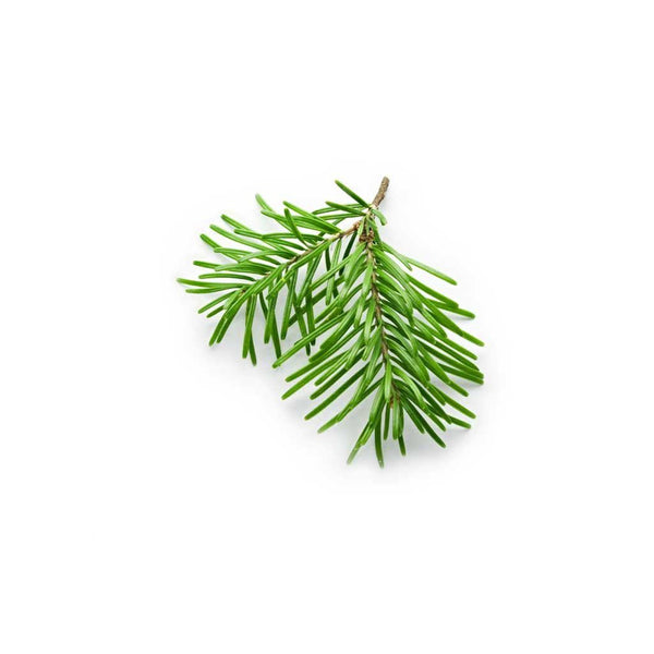 BALSAM FIR OLEORESIN ALL NATURAL*