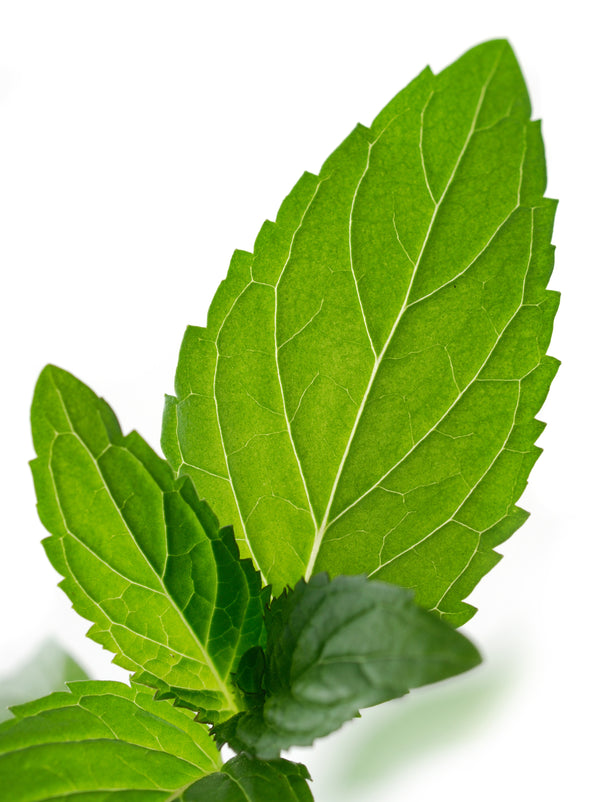 Peppermint Indian Organic