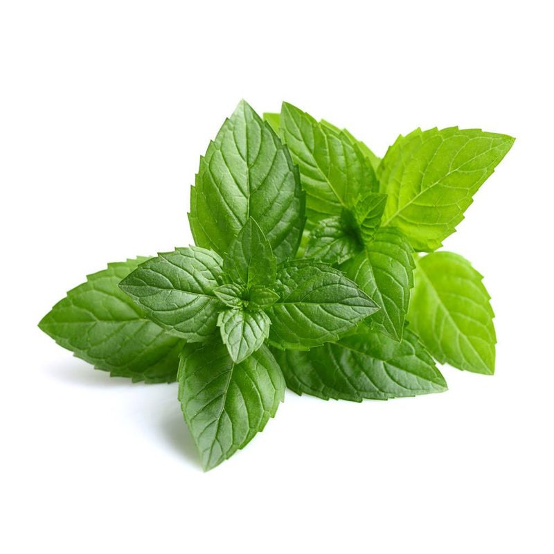PEPPERMINT INDIAN OIL