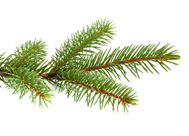 Spruce Pure
