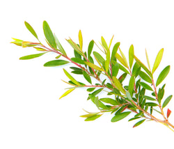 Tea Tree Organic Oil