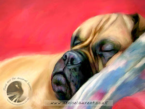 A Quick Nap - Bullmastiff Dog Print