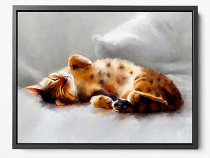All Curled Up - Framed Canvas Print